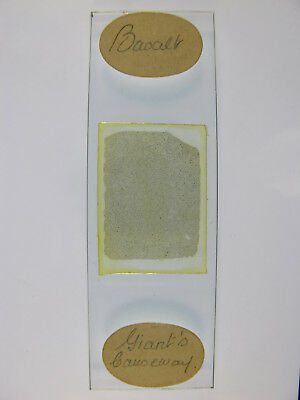 Antique Microscope Slide by Watson. Petrology. Basalt from Giant's Causeway.