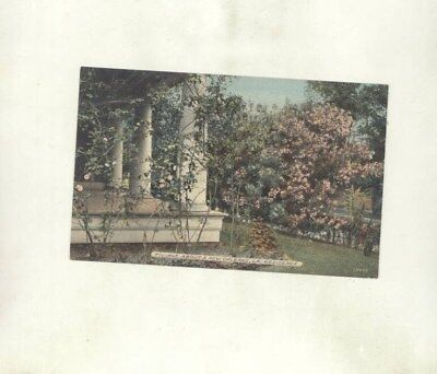 1910's Foliage About a New Orleans Residence Louisiana ORIGINAL Postcard ft3534