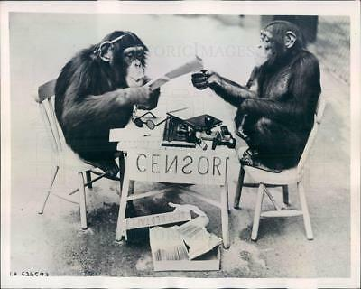 1939 Press Photo Chimpanzees Posing as Correspondent & Censor - ner62655