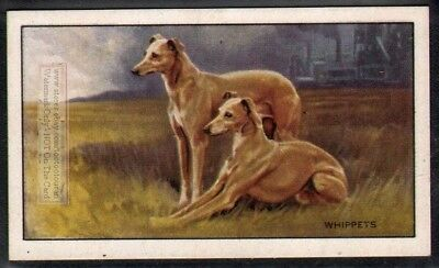 Whippet Dog 75+ Y/O Ad Trade Card