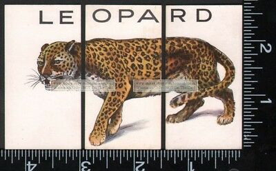 LEOPARD Wild Cat Set of 3 80+ Y/O Ad Trade Cards Panther