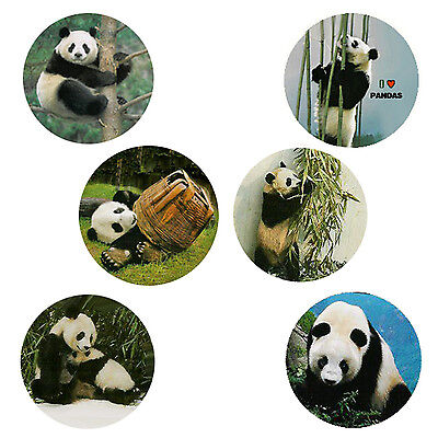 Panda  Magnets : 6 Cool Pandas for your Fridge or Collection-+Buy