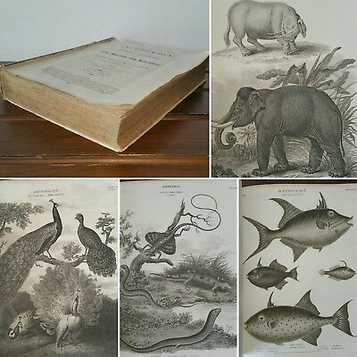 1840 Gems of Beauty 12 PLATES Engravings Edward Henry Corbould Book Poetry