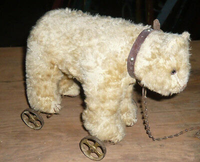c1900  Teddy polar  Bear on wheel Pull Toy   with  button  see !!  marvelous