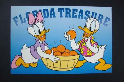 698) Walt Disney World Mr And Mrs Donald Duck With The Florida Orange Treasures