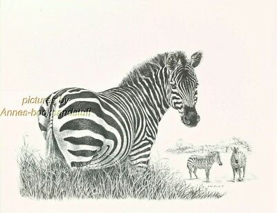 #174 ZEBRA  * wildlife  art print *  pen & ink drawing by Jan Jellins