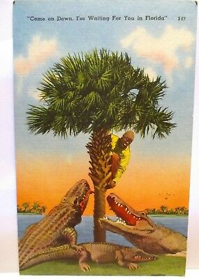 1963 Postcard Gators With Black Man In Tree,come On Down,i'se Waiting In Fl