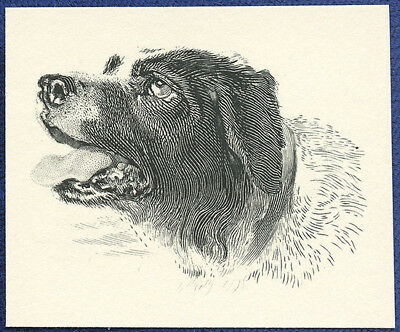 AMERICAN BANK NOTE Co. ENGRAVING: BRUNO THE DOG