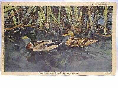 "1940 Wis. Conservation Dept.  # V39 Postcard "" Mallards "" Greetings Rice Lake Wi"