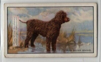 Irish Water Spaniel Dog 75+ Y/O Ad Trade Card