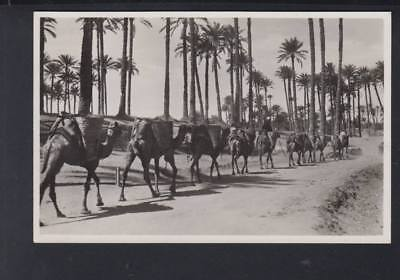 Libia Libya Italy Colony Old PPC Carawane circ. 1939 Tripoli to Köln Germany