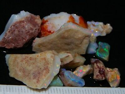 Quality Seam/Fossil Opal Rough 40cts Coober Pedy, Bright Fires, Small Pieces. NR