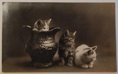 Vintage 1909 Postcard Tiger Cats Kittens Real Photo RPPC Pittsfield Maine