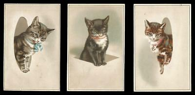 U92 - KITTENS COMING OUT OF SHAPES - prob. HELENA MAGUIRE - VICTORIAN CAT CARDS