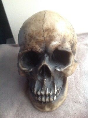 Large Realistic Decor Halloween - Gothic Skull