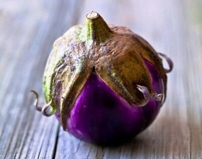 EGGPLANT 'Thai Ball' 30+ seeds ASIAN VEGETABLE garden aubergine heirloom PURPLE