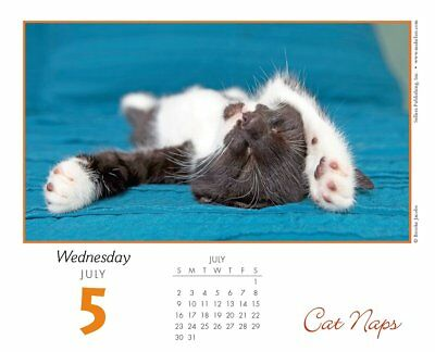 Cat Naps 2017 Desk Boxed Easel Calendar - Sleepy Kitties!! Cute & NEW!