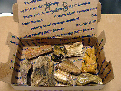 Eden Valley Petrified Wood From Wyoming Usa  # 28