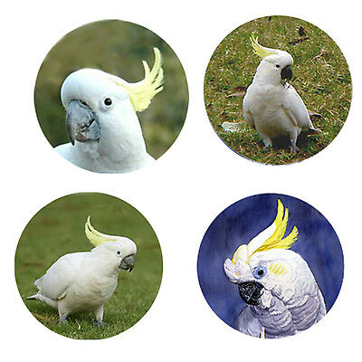 Cockatoo Parrot Magnets: 4 Cockatoos 4 your Fridge or Collection-A Great Gift