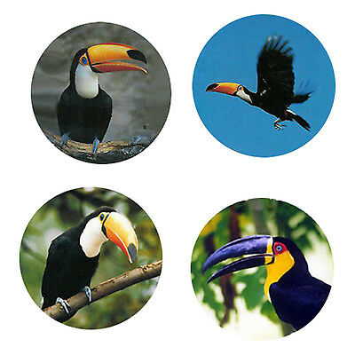 Toucan Magnets: 4 Way-Cool Toucans for your Fridge or Collection-A Great Gift