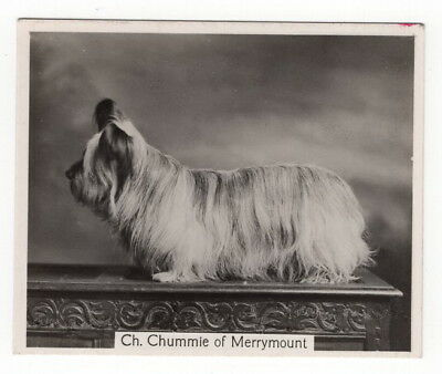 Vintage 1938 Champion Dogs Card of Skye Terrier Chummie of Merrymount
