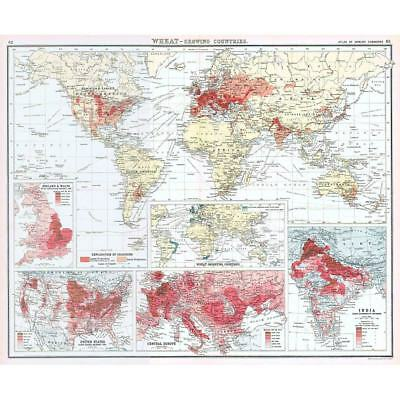 Wheat Production, Growing and Importing Countries - Antique World Map c1906