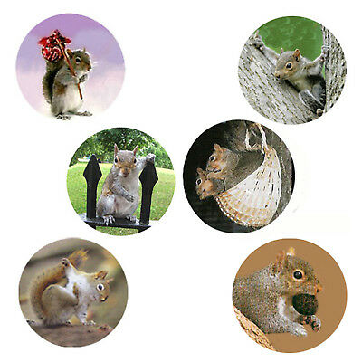 Squirrel Magnets:6 Sassy Squirrels 4 your Fridge or Collection!