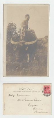 China Old Postcard Chinese Boy Riding Bull To England 1905 !!
