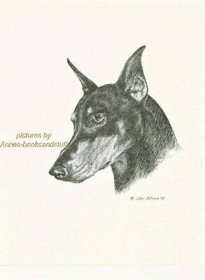 #8 DOBERMAN PINSCHER dobi * Dog Art * pen and ink Jan Jellins