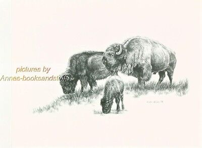 #175 BUFFALO with CALF * wildlife  art print *  pen & ink drawing by Jan Jellins