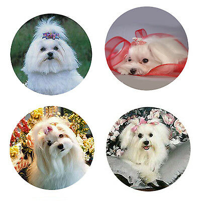 Maltese Magnets 4 Way-Cool Maltese for your Fridge or Collection-A Great Gift