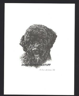 #406 PORTUGESE WATER DOG *  dog art print * Pen and ink drawing * Jan Jellins