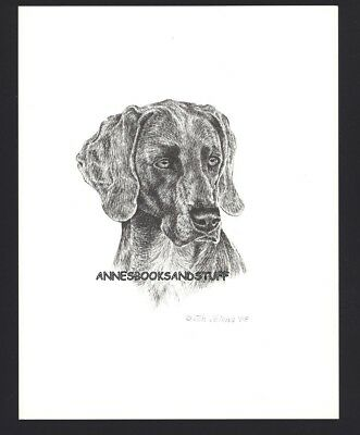#412 WEIMARANER Weimie *  dog art print * Pen and ink drawing * Jan Jellins