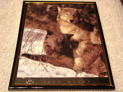 Wolves ( Wolf ) 8X10 Framed Picture #7