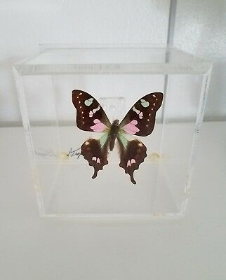 Signed Art real mounted BUTTERFLY in acrylic display boxes Wall OR Shelf