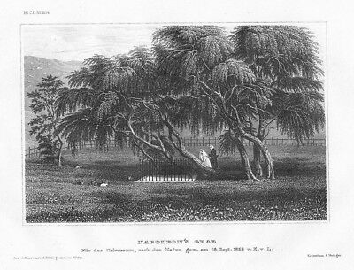 1850 - St. Helena Saint Helena Napoleon Grab Insel Amerika  Stahlstich engraving