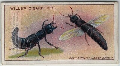 Devil's Coah Horse Beetle Insect Plant Pest 100+ Y/O Trade Ad Card