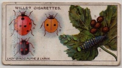 Ladybug Ladybird Insect Plant Pest 100+ Y/O Trade Ad Card