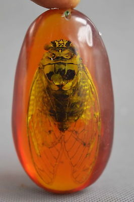 Exquisite Collectable Handwork Burnish Inside Amber Inlay Cicada Fashion Pendant