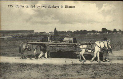 China Coffin Carried by Two Donkeys in Shense - Shaanxi? c1910 Postcard chn