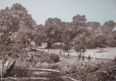 "Rare Unused Vintage Postcard Of ""the Dell"" Hyde Park, London."