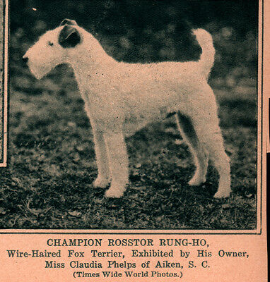 Wirehaired Terrier Rotogravure 2 Ads Caswell Kennel Rosstor Westminster