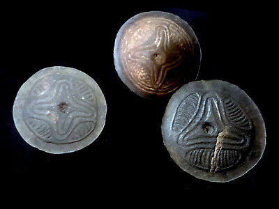 set of three scorcerer's tools Coconut shell ABELAM Papua New Guinea