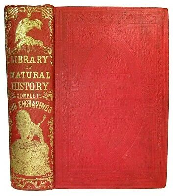 Science Natural History Animals 1851 Zoology Biology Menagerie Zoo Antique Book