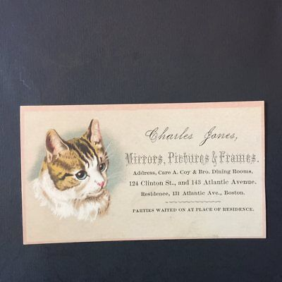 Victorian trade card=Blue-Eyed CAT Beauty=Charles Janes-Mirror-Frame=BOSTON-MA