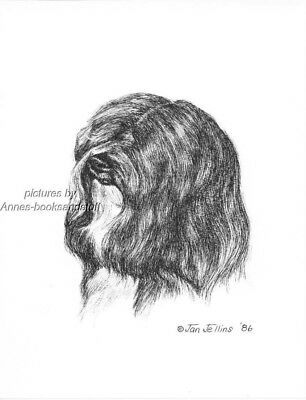 #373 TIBETAN TERRIER portrait dog art print * Pen and ink drawing * Jan Jellins