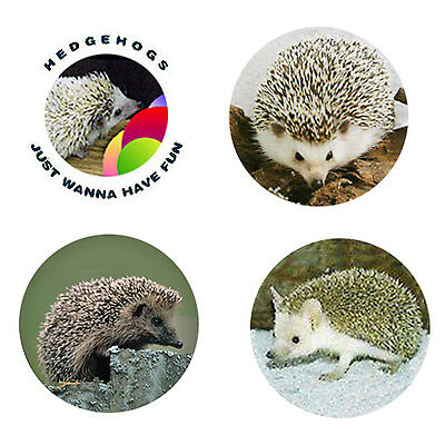 Hedgehog Magnets-B:  4 Charming Hedgehogs for your home or collection-Great Gift