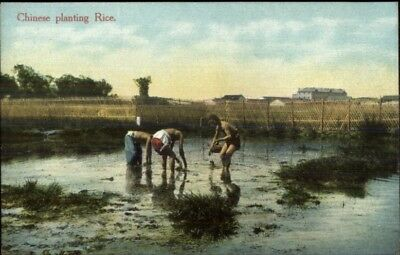 China - Chinese Planting Rice Aquaculture Published in Shanghai Postcard chn