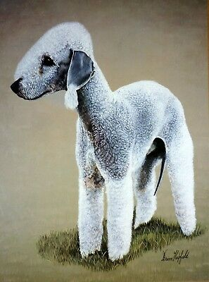 "Sale - Bedlington Terrier By Brian Hupfield Dog Print 12 X 16"" - Reduced"