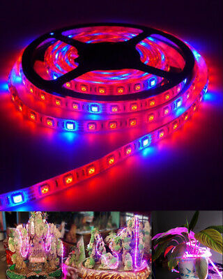 LED Grow Light DC12V Growing LED Strip 5050 for Aquarium Greenhouse Plant Light